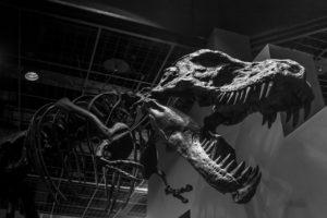 モノクローム 白黒 恐竜 茨城 ミュージアムパーク茨城県自然博物館 博物館 ギャラリー 骨